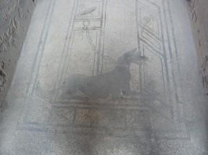 Perro en la entrada de una casa