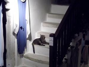 Gato en la escalera en Grecia.