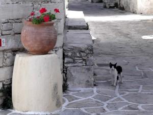 Gato en Grecia.
