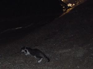 Gato en la playa. Mikonos-Grecia.