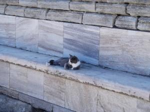 Gato en el banco en Grecia.