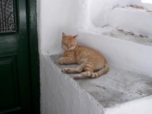 Gato dormido en la escalera en Grecia.