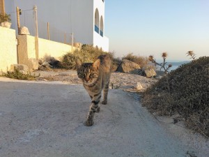Gato caminando en Grecia.