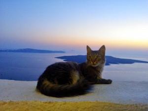 Gato disfrutando del atardecer en Santorini-Grecia
