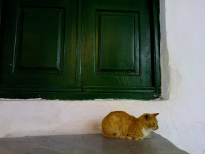 Gato pensando en la puerta. Atenas-Grecia.