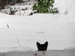 Gato tímido en Grecia