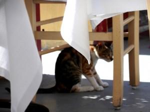 Gato bajo la mesa en Santorini-Grecia