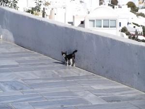 Gato en Grecia